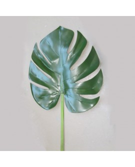 Feuille de monstera
